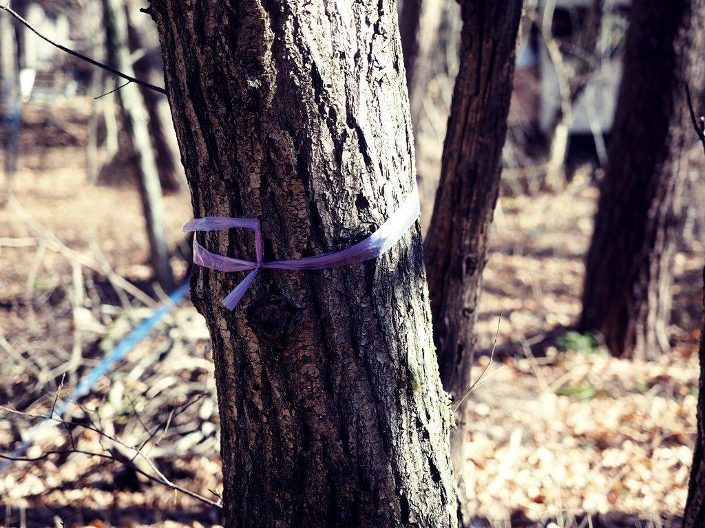 伐採しない木