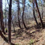 千ヶ滝 長倉山国有林